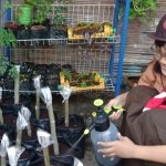 Pertiwi Eka Putri Handayani, Pejuang 1000 Tanaman Kelor