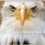 Acara Pengakuan Virtual Eagle Scout Tahunan ke-11
