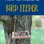 Cara Membuat Kerajinan Pengumpan Burung Stik Es Loli