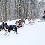 Apa Yang Lebih Menyenangkan Daripada Berkemah Musim Dingin? Berkemah dengan Anak Anjing!